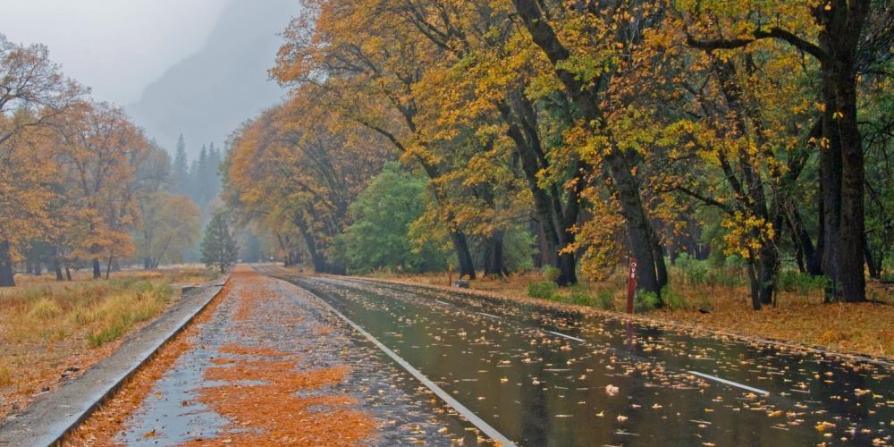 fall scene on road